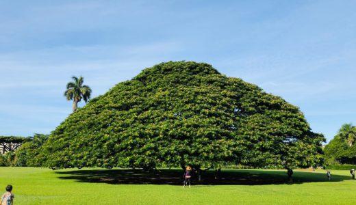 ハワイで初めてのノースショア観光ツアーに参加!チキンをがっつり食べて、午後はTim Ho Wan(ティム・ホー・ワン)で飲茶・点心を食べまくる